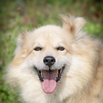 Скрэппи - Собаки в добрые руки