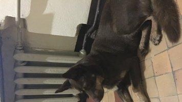 Битлджус - Найденные собаки