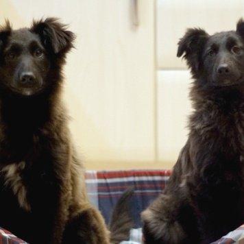 Окинава - Собаки в добрые руки