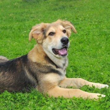 Викусик - Собаки в добрые руки