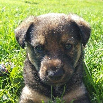 Бонифаций - Собаки в добрые руки