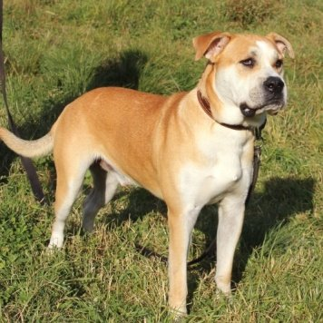 Купидон - Собаки в добрые руки