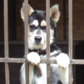 Жуля - Собаки в добрые руки