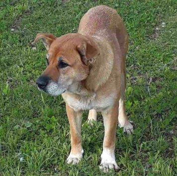 Рыжуха - Найденные собаки