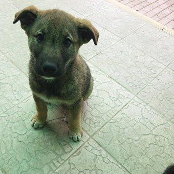 Собака - Собаки в добрые руки