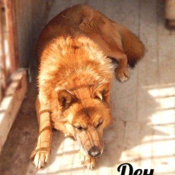 Ден - Собаки в добрые руки