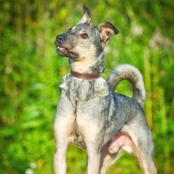 Джексон - Собаки в добрые руки