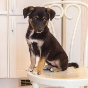 Анабель - Собаки в добрые руки