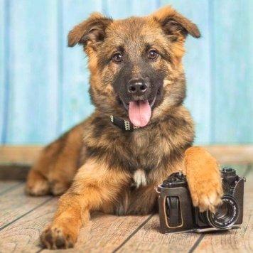 Думка - Собаки в добрые руки
