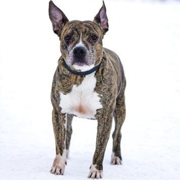 Фиеста - Собаки в добрые руки