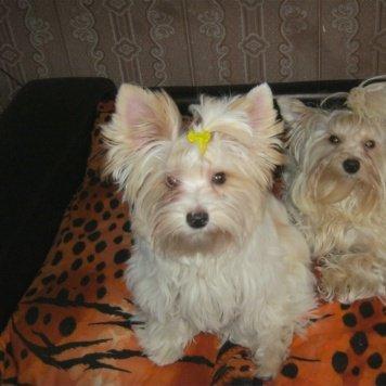 Дора - Пропавшие собаки
