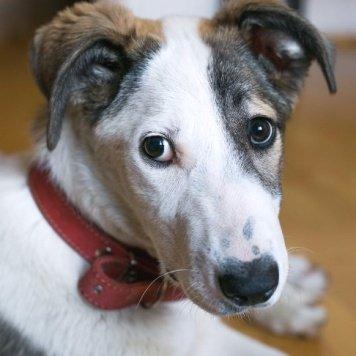 Виктория - Собаки в добрые руки