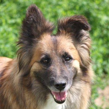 Арна - Собаки в добрые руки