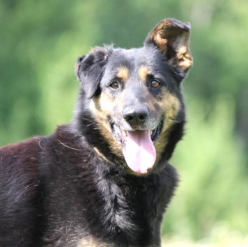 Байкал - Собаки в добрые руки