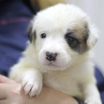 Афелия - Собаки в добрые руки