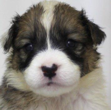 Каледония - Собаки в добрые руки