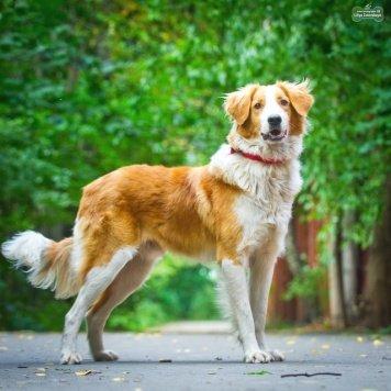 Салют - Собаки в добрые руки