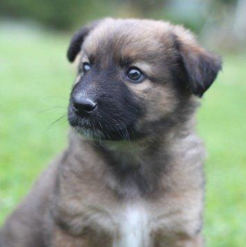 Марсель - Собаки в добрые руки