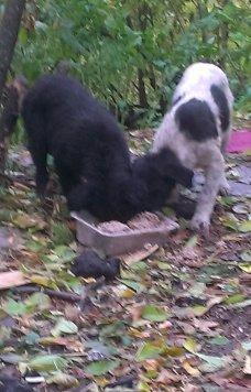 Срочно- щенки - Собаки в добрые руки