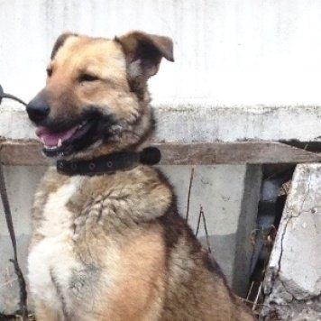 Лота - Собаки в добрые руки
