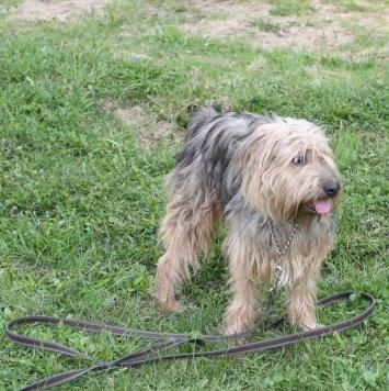 Искра - Собаки в добрые руки
