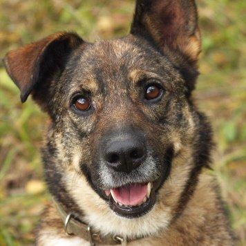 Бьянка - Собаки в добрые руки