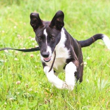 ВанилькаМегги - Собаки в добрые руки
