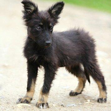 ШанельРэм - Собаки в добрые руки